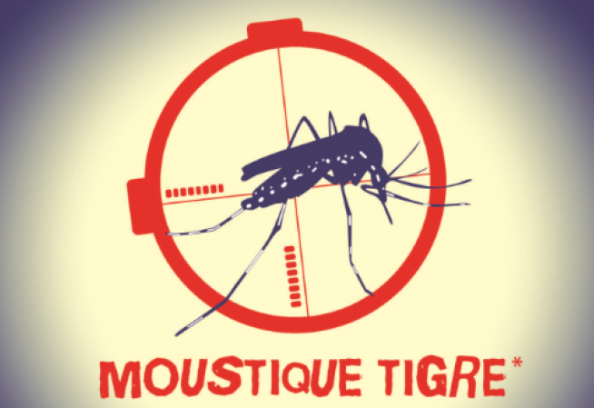 Illustration moustique tigre